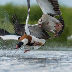 2e Plaats Categorie Vogels