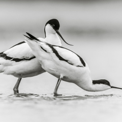 3e Plaats Categorie Vogels