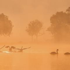Derde prijs Landschap Misty morning