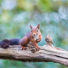 Derde prijs Overige dieren Nieuwsgierige eekhoorn