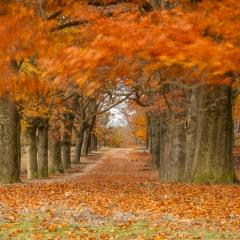 Herfst - Derde prijs Jaarthema Beweging - Gerrit Sleurink