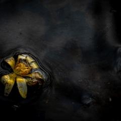Derde Prijs - Macro / Close-up - Gerrit Sleurink